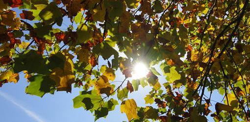 Sol brillando a través de un árbol